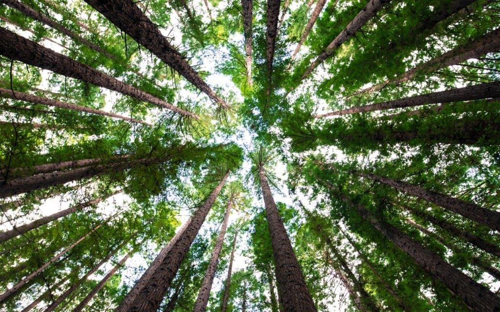 Empresa Proyectos de Ingeniería Forestal