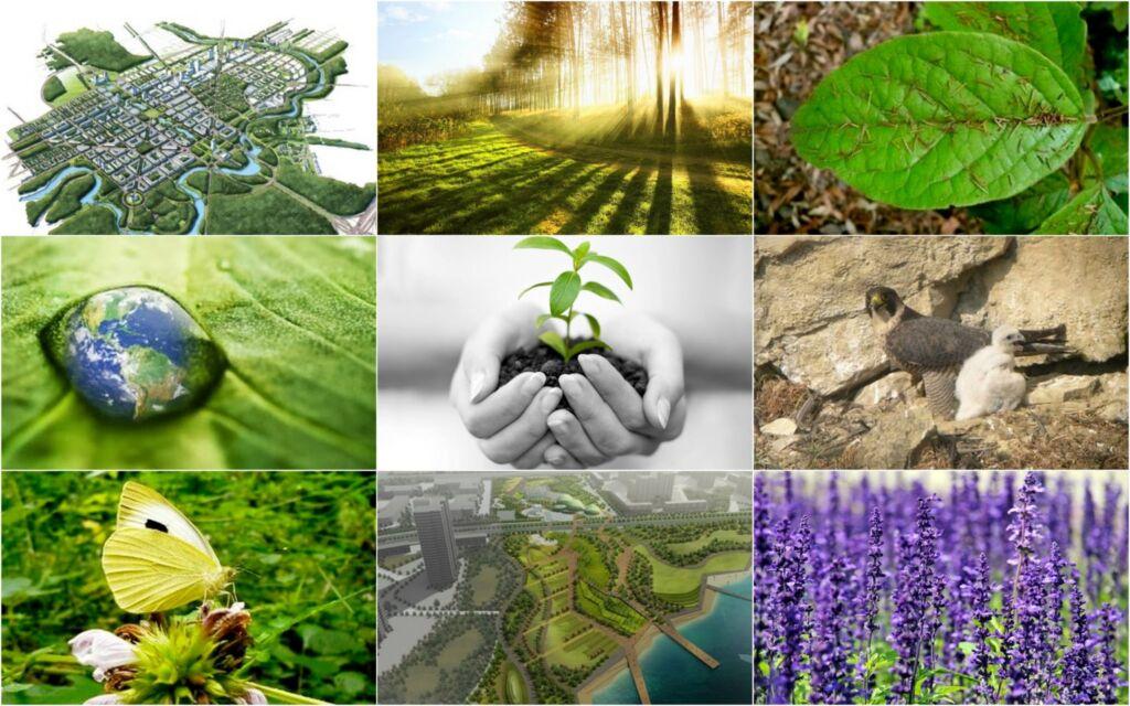 MEDIO AMBIENTE Empresa Ambiental Consultoría Medioambiental Madrid