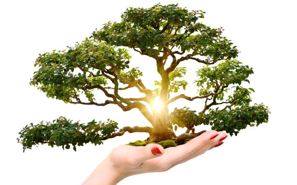 Informes Ambientales Empresa de Medio Ambiente Madrid