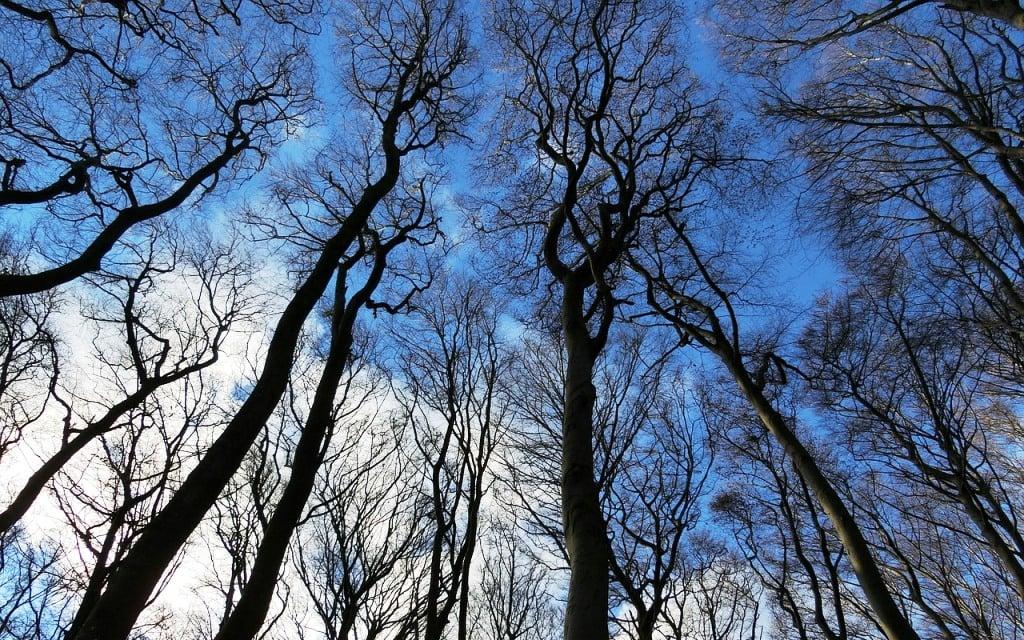 Proyectos de Forestacion Empresa Consultoría Ingnieria Forestal Medio Ambiente Madrid