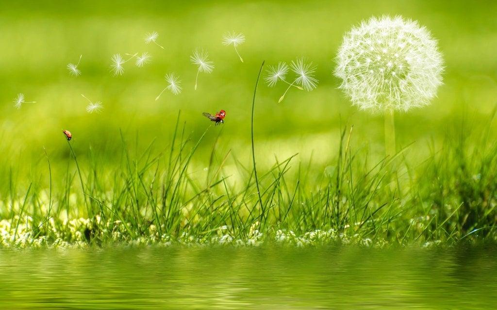 DESCRIPCIÓN DEL PROYECTO A VALORAR Empresa Ambiental Consultoría Medio Ambiente Madrid Estudio de Impacto Ambiental