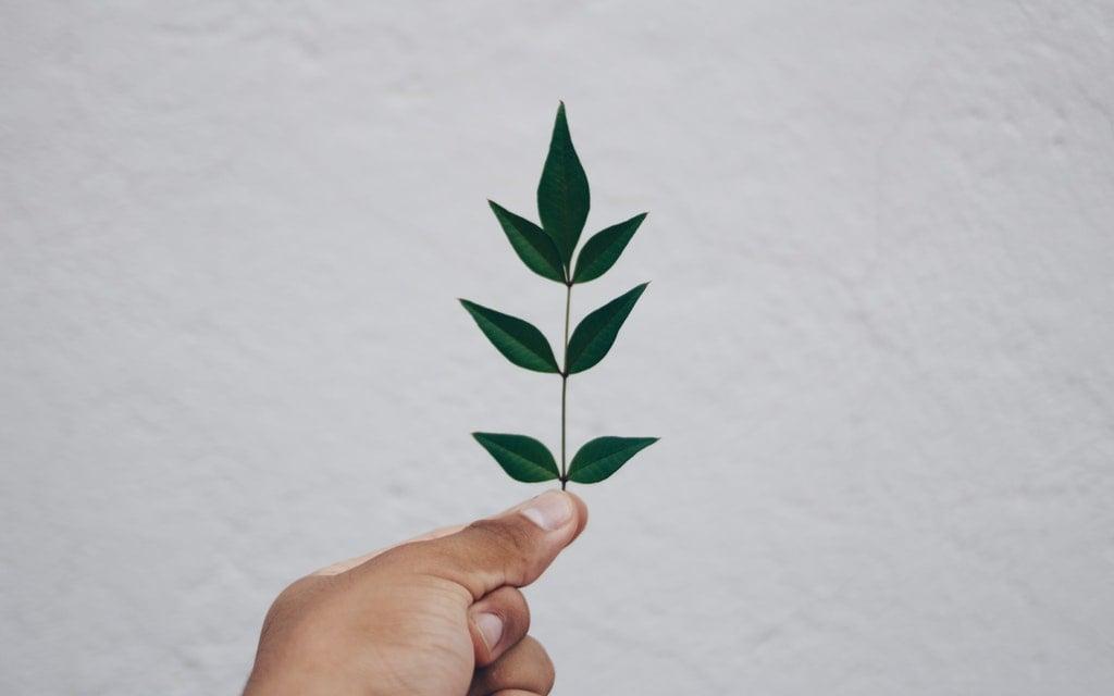 PARTES DEL EIA Empresa Ambiental Consultoría Medio Ambiente Madrid Estudio de Impacto Ambiental