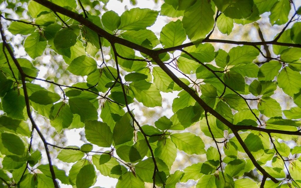 LEGISLACION Empresa Ambiental Consultoría Medio Ambiente Madrid Estudio de Impacto Ambiental