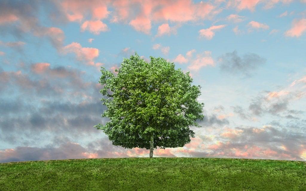 ¿QUÉ INFORMACIÓN ES NECESARIA? Empresa Consultoría Medio Ambiente Madrid Estudio de Impacto Ambiental